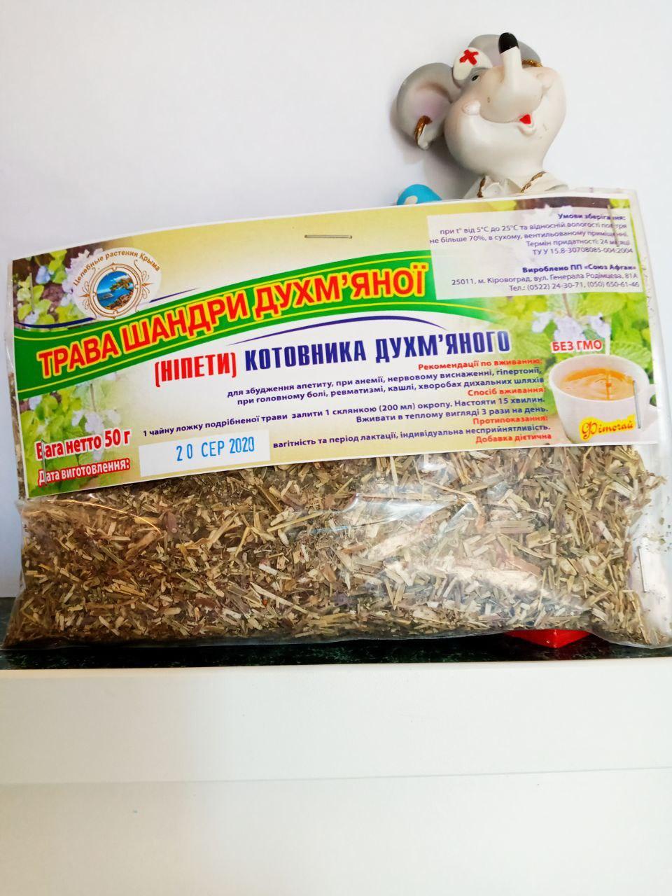 Покупаете траву Шандра душистая Котовний как прекрасное жаропонижающее, потогонное, противоспалительное средство в фитотерапии
