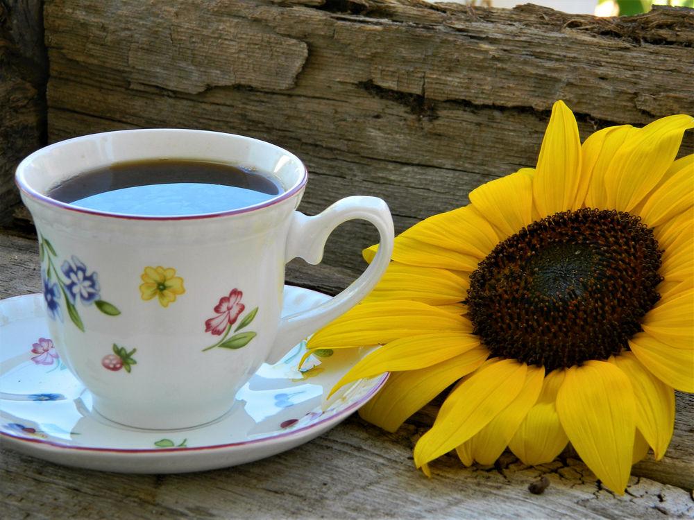 Цілющи властивості соняшника при нервовой збудливості